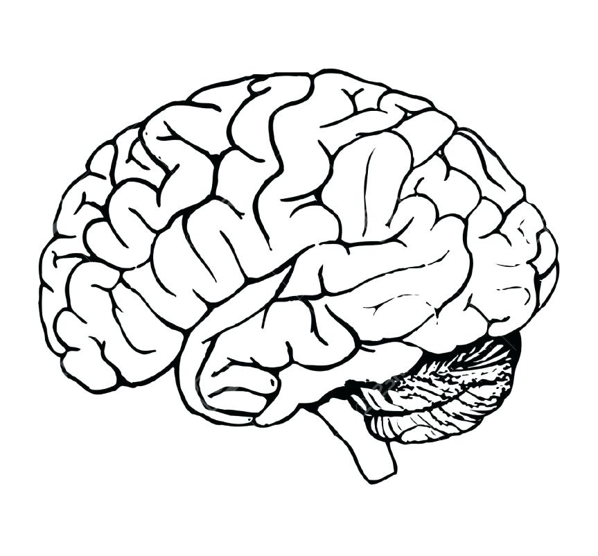 863x802 Brain Coloring Page Brain Head Coloring Page Anatomy Book Answers