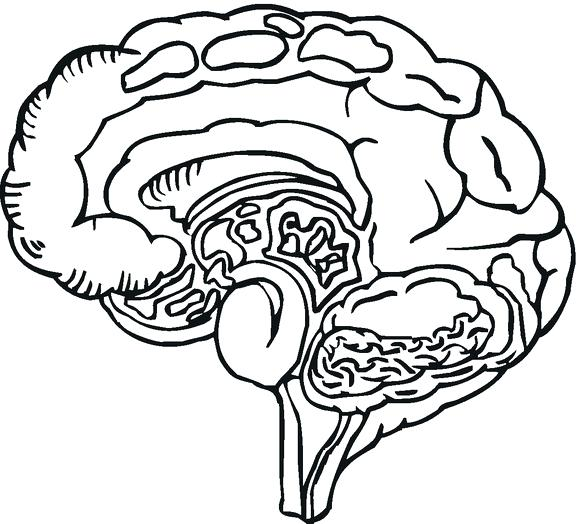580x524 Brain Coloring Pages Human Brain Coloring Page Brainpop Coloring