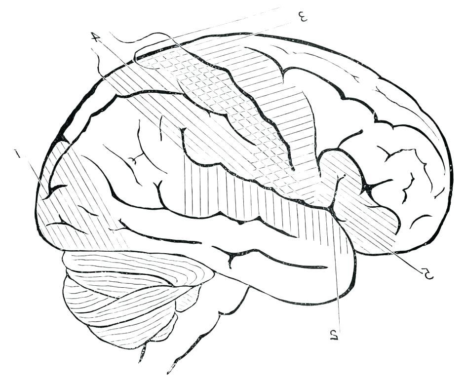 940x770 Brain Coloring Sheet Also Brain Coloring Sheet Brain Coloring