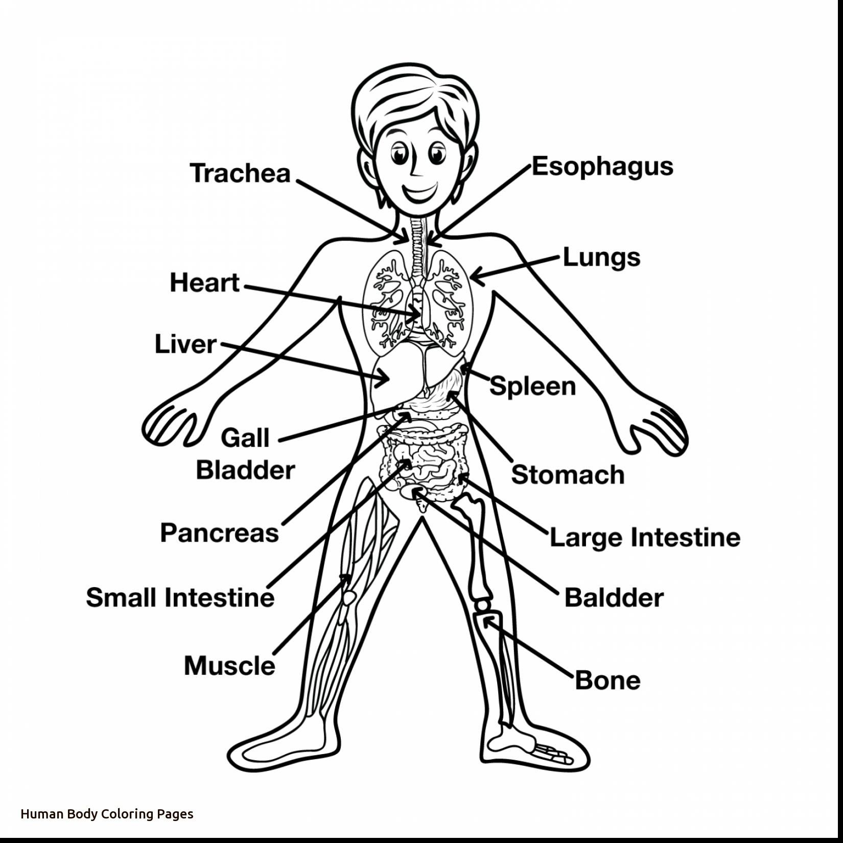 1650x1650 Human Body Coloring Pages Printable Coloring Pages