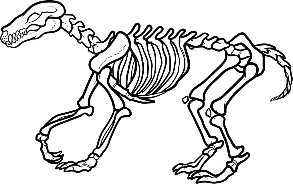 1024x643 Human Skeleton Coloring Pages Printable Me Free Dinosaur Mummy
