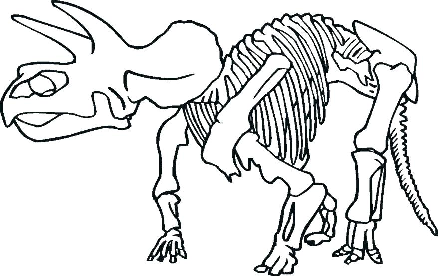 878x553 Skeleton Coloring Sheet Human Skeleton Coloring Page Dinosaur
