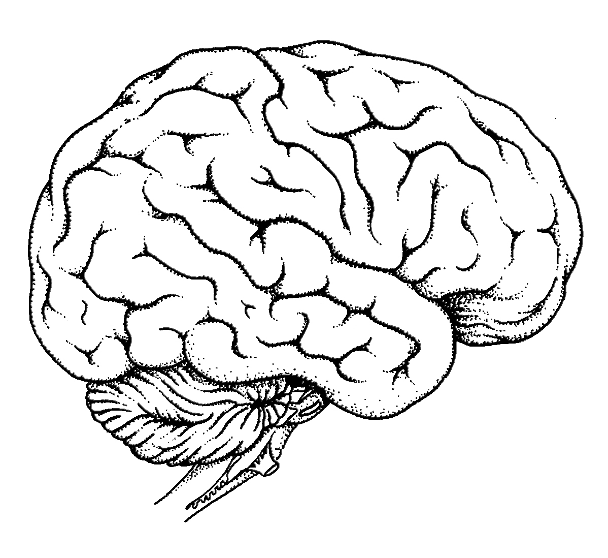 1198x1098 Brain Coloring Page With Human