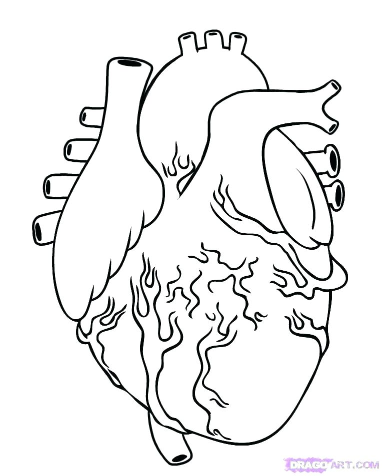 764x953 Human Heart Coloring Pages Human Organs Coloring Page Lovely Human