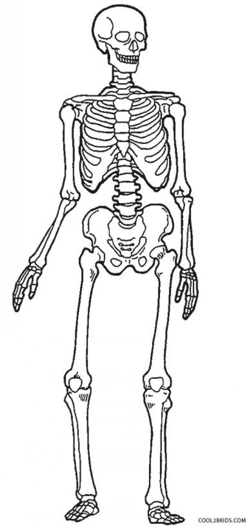 800x1686 Human Skeleton Coloring Page