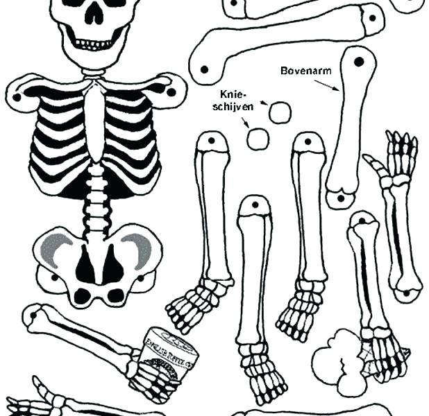 618x600 Human Coloring Pages Detail Coloring Pages Human Skeleton Coloring