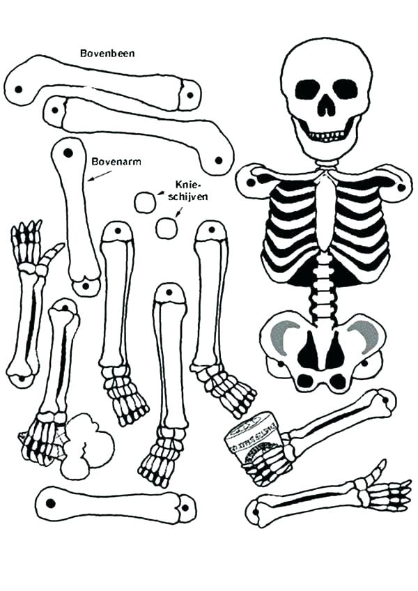 600x848 Human Skeleton Coloring Pages Skeletons Coloring Pages Skeleton