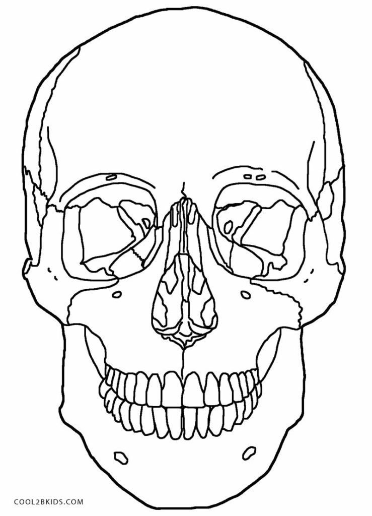 739x1024 Skull Anatomy Coloring Pages Skull Anatomy Coloring Pages Skull