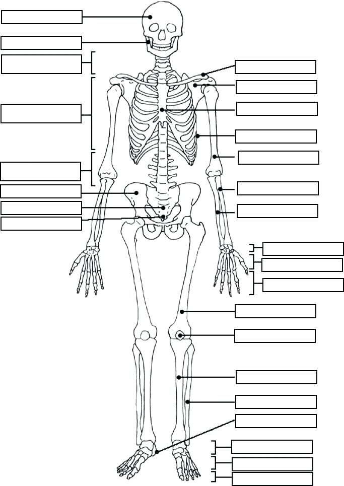 683x965 Day Of The Dead Skull Coloring Pages Kids Coloring Human Anatomy