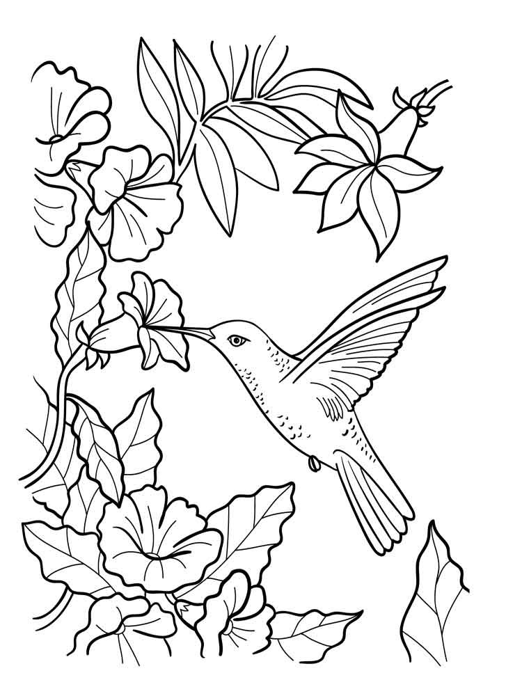 750x1000 Lovely Images Of Hummingbird Flower Coloring Pages Free