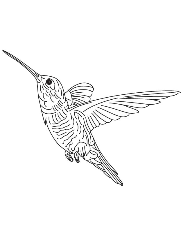 630x810 Hovering Hummingbird Coloring Page Download Free Hovering
