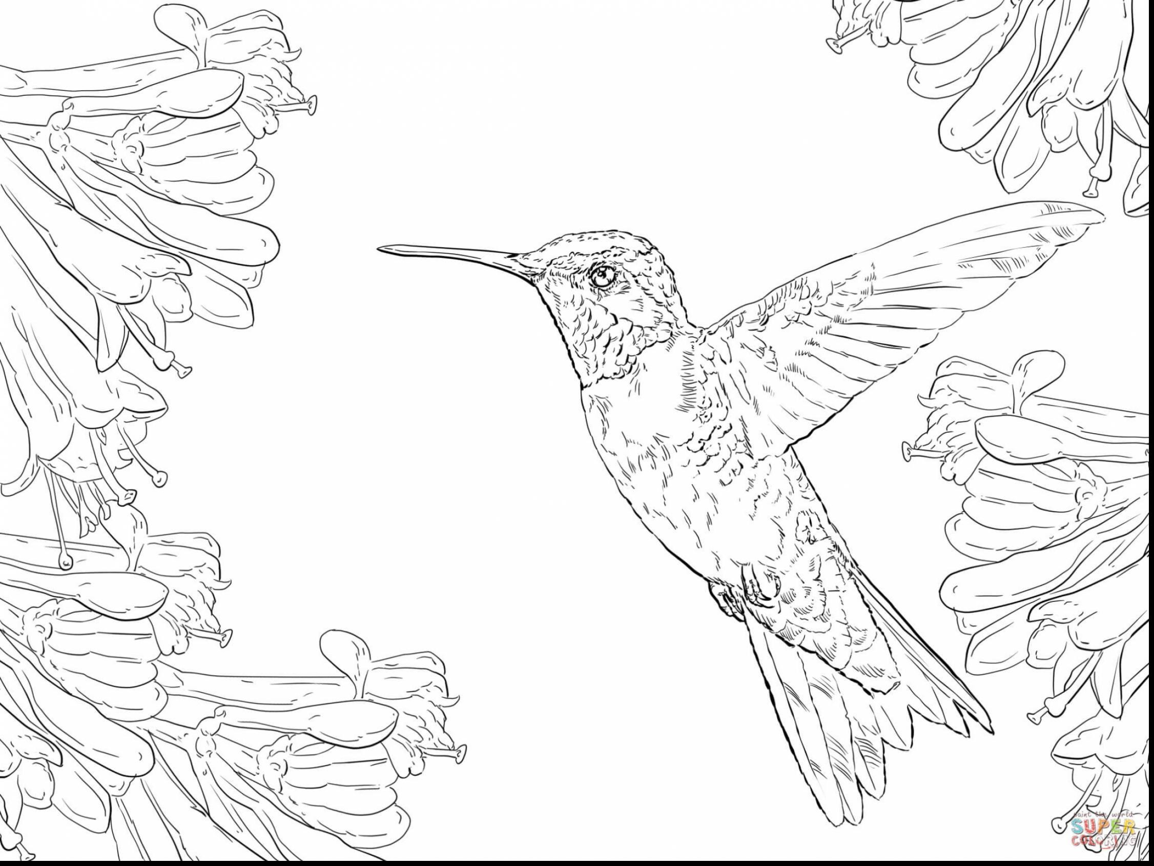 2252x1689 Hummingbird Animal Coloring Pages Free Draw To Color