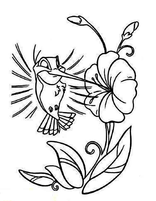 600x770 Hummingbird Coloring Pages