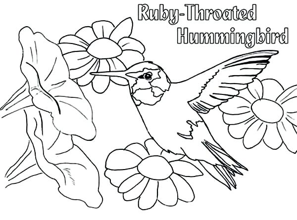 600x445 Hummingbird Coloring Pages As Awesome Remarkable Hummingbird