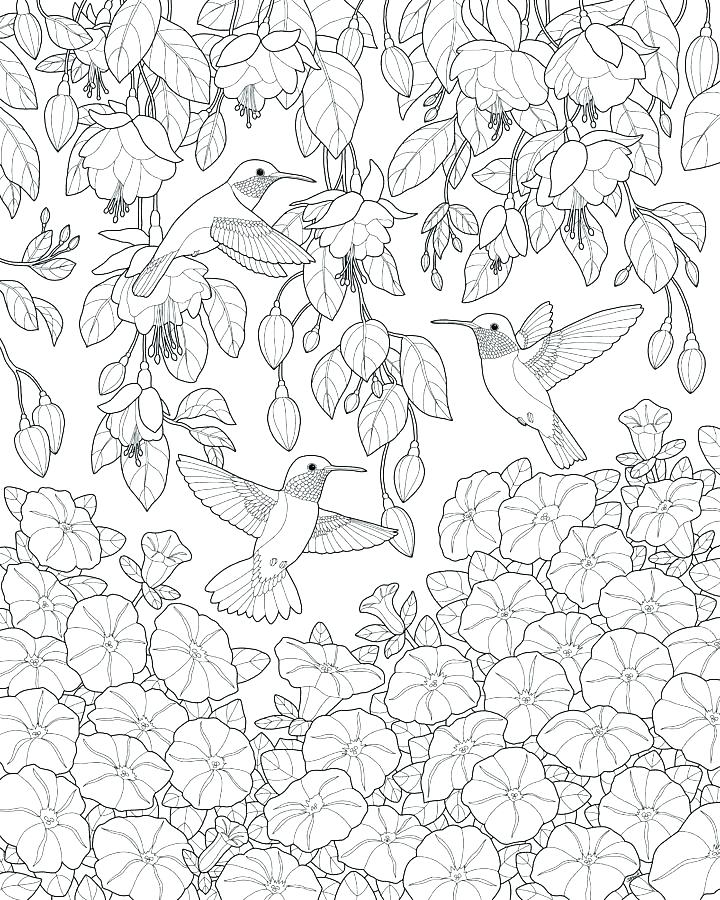 Hummingbird And Flower Coloring Pages at GetDrawings.com ...