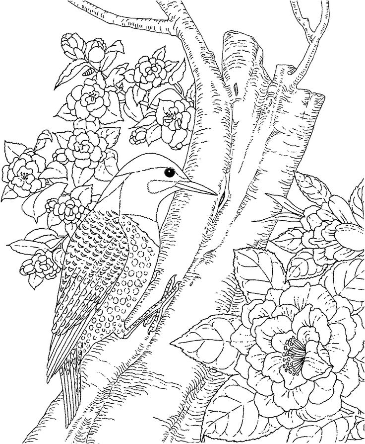 736x893 Adults Color Pages Free Printable Hummingbird Stationery Box