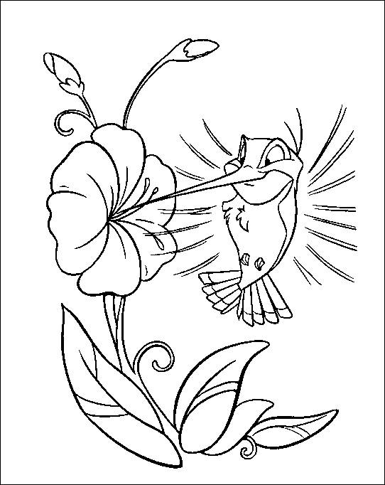 542x682 Hummingbird Flit And Flower Coloring Pocahontas Characters