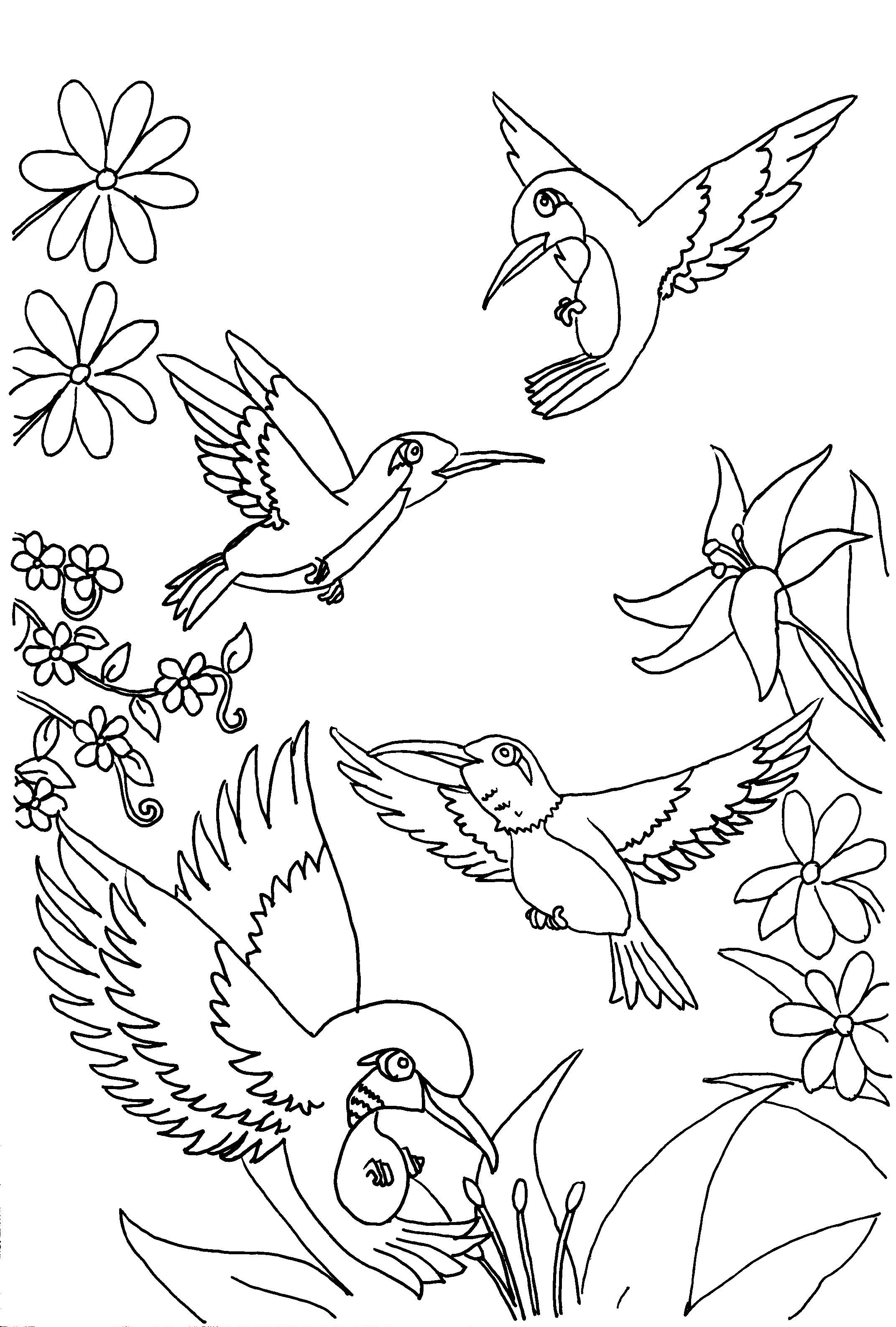 2143x3174 Hummingbirds Adult Coloring Pages Hummingbird