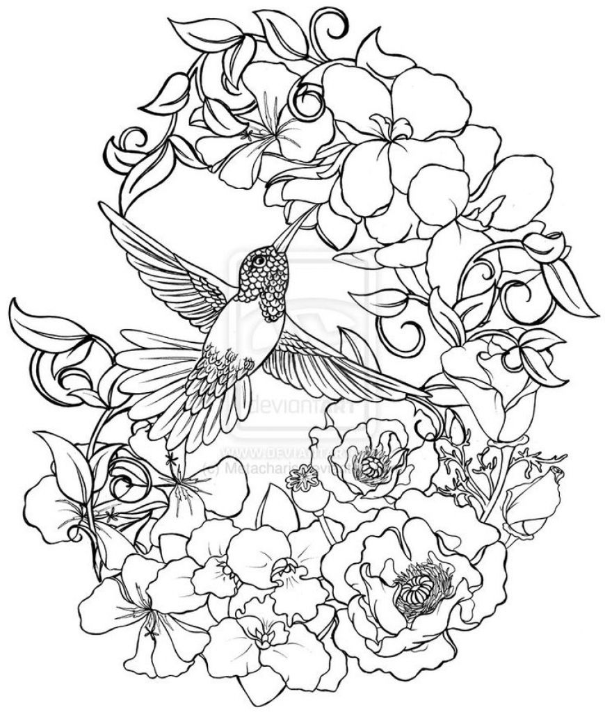 870x1024 Lovely And Detailed Hummingbird And Flower Drawing To Color