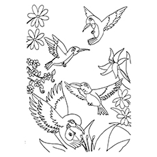 230x230 Top Hummingbird Coloring Pages For Your Toddler