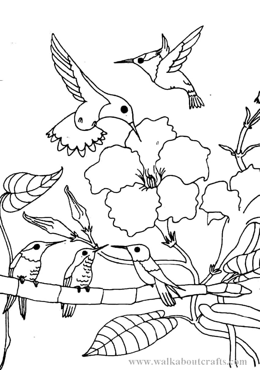 850x1209 Unique Hummingbird Flower Coloring Pages Free Coloring Pages