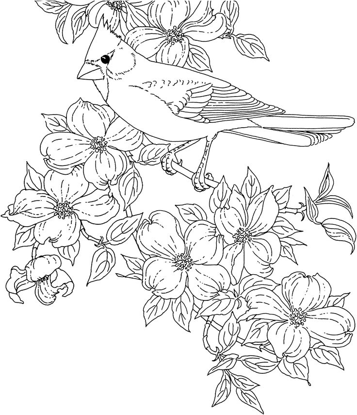 736x855 Adults Color Pages Free Printable Hummingbird Worksheets