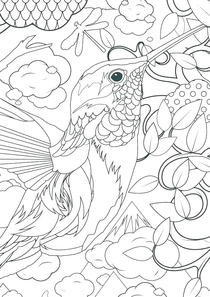 736x1041 Hummingbird Coloring Pages