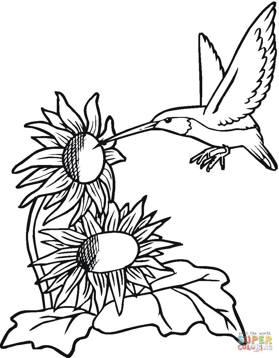 934x1200 Coloring Pages Hummingbirds Flowers Coloring Page Fun
