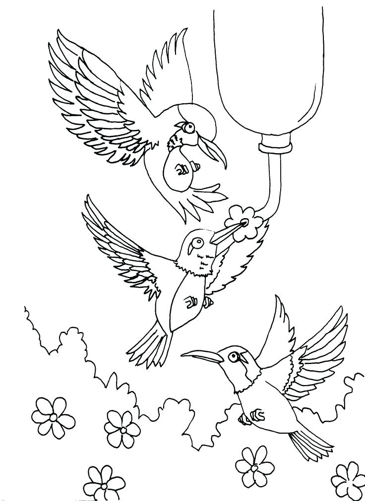 736x1011 Coloring Pages Of Hummingbirds Coloring Pages Of Hummingbirds