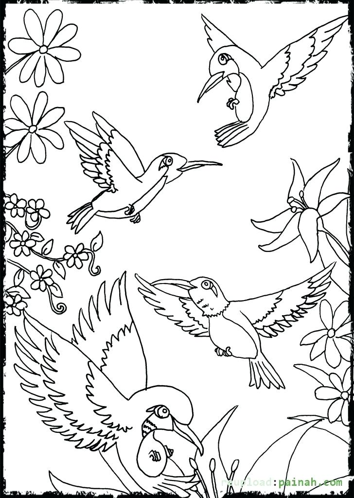 728x1024 Coloring Pages Of Hummingbirds Hummingbird Coloring Pages Flower