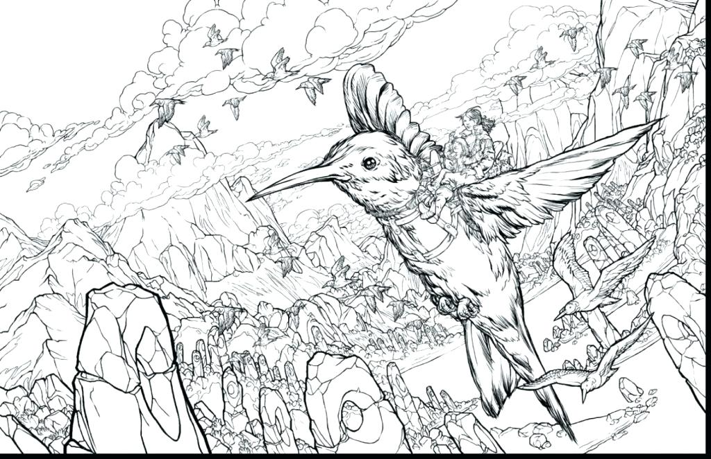 1024x662 Coloring Pages Of Hummingbirds