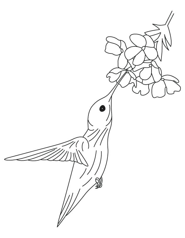 630x810 Enchanting Coloring Pages Of Hummingbirds Hummingbird And Flower