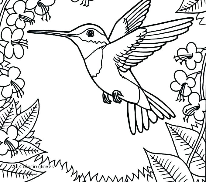 Hummingbird Coloring Page at GetDrawings.com | Free for personal use ...
