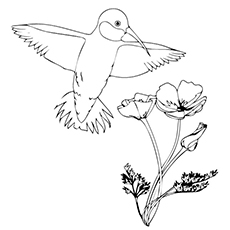 Hummingbird Coloring Page at GetDrawings.com   Free for ...