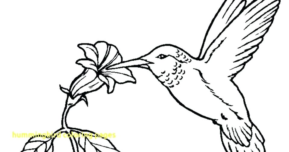 Hummingbird Coloring Page at GetDrawings.com | Free for ...