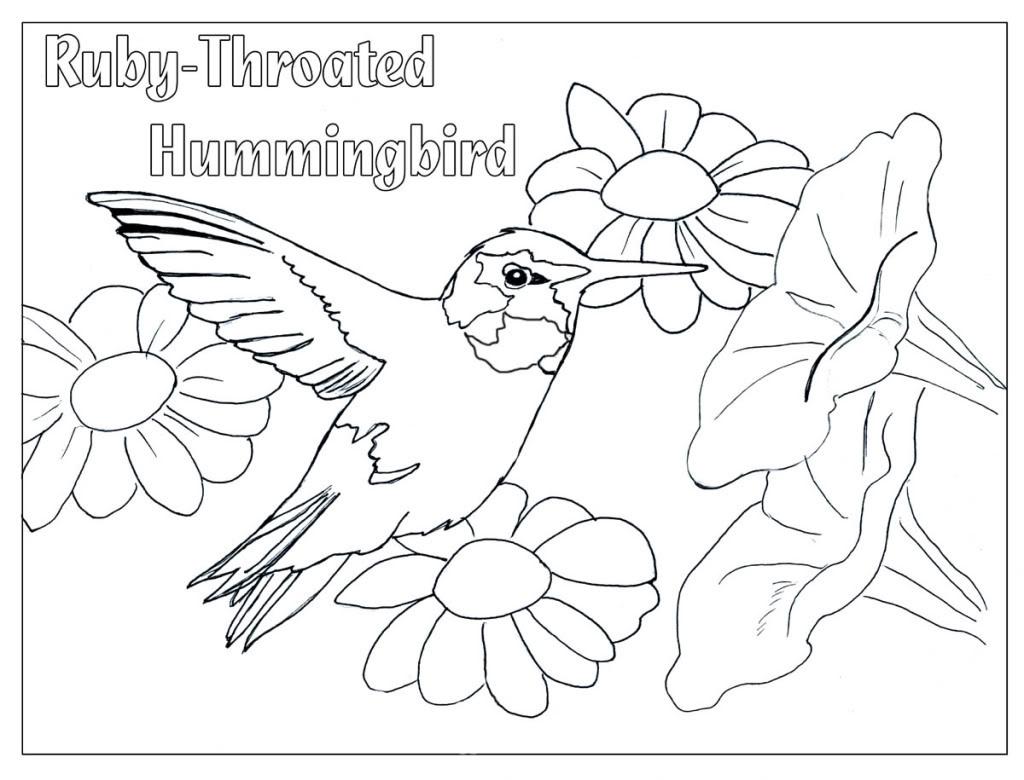 1024x780 Elegant Adult Top Hummingbird Coloring Page Gallery Dashah Beauty