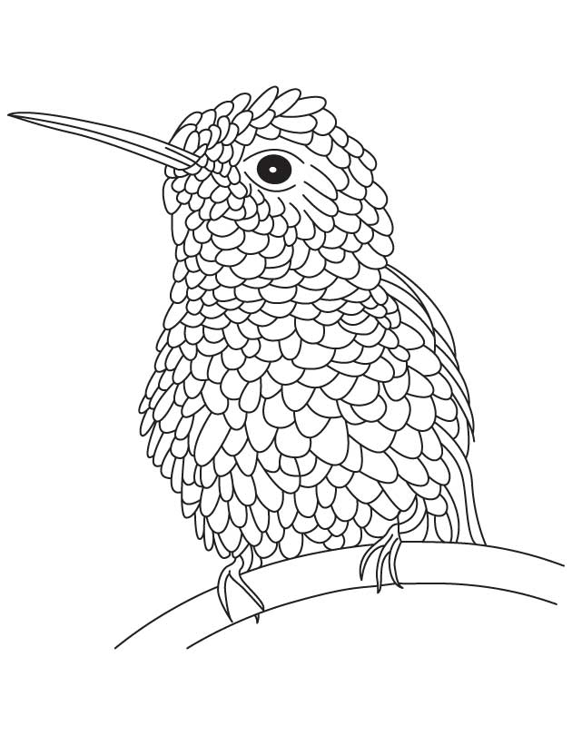 Hummingbird Coloring Pages For Adults At Getdrawings Com Free For