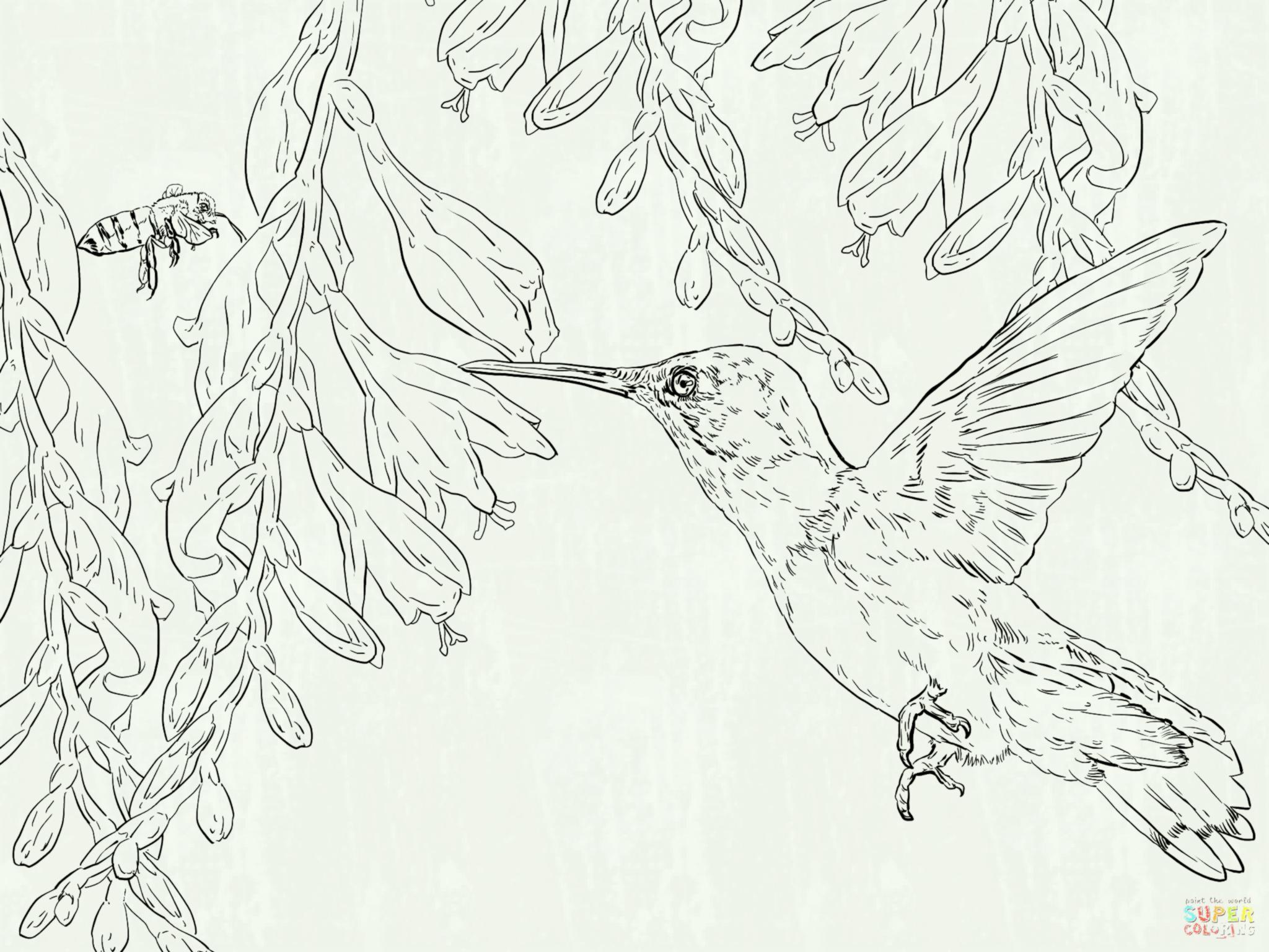 2048x1536 Humming Bird Coloring Pages Hummingbird Page Az