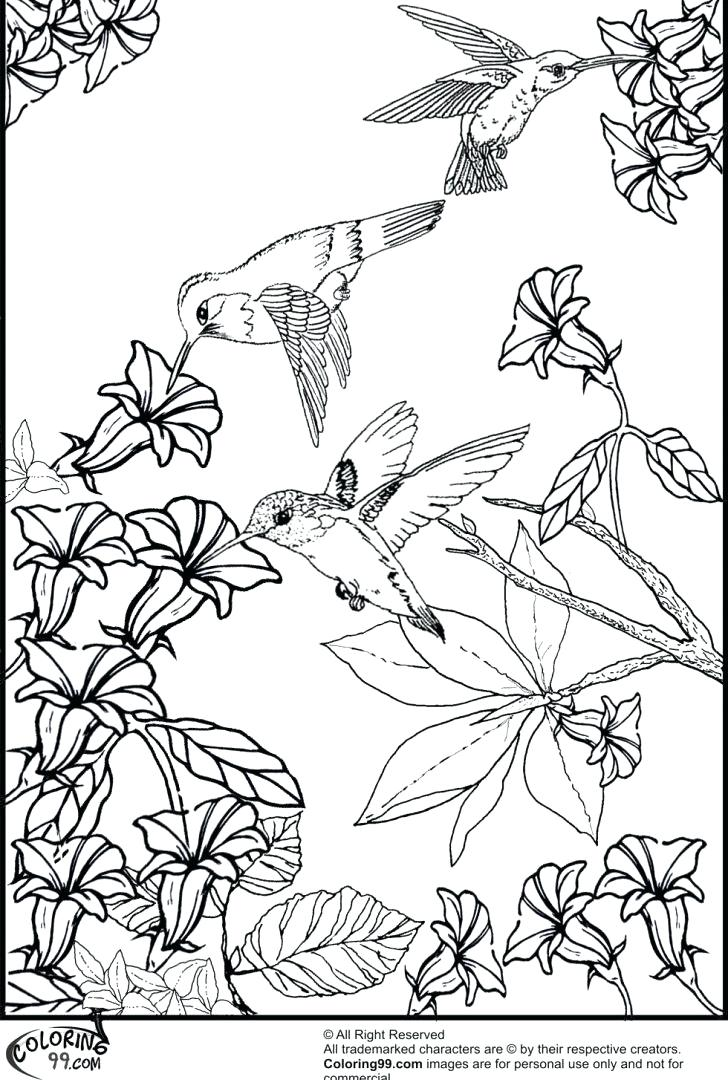 728x1080 Hummingbird Coloring Page Free Coloring Pages For Adults Mama