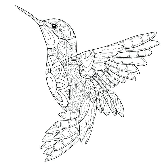 570x570 Hummingbird Coloring Page Hummingbird Animal Coloring Pages Adult