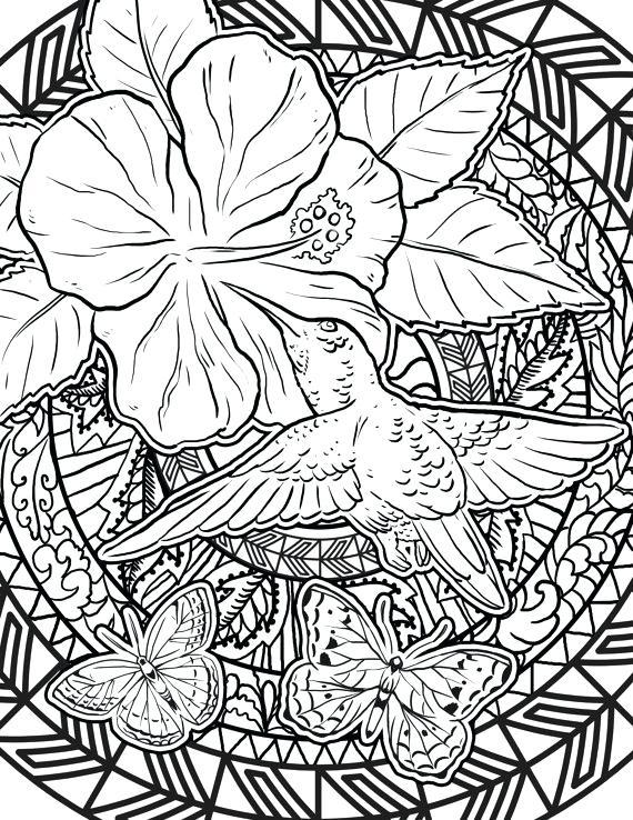 570x738 Hummingbird Coloring Page Items Similar To Hummingbird Coloring