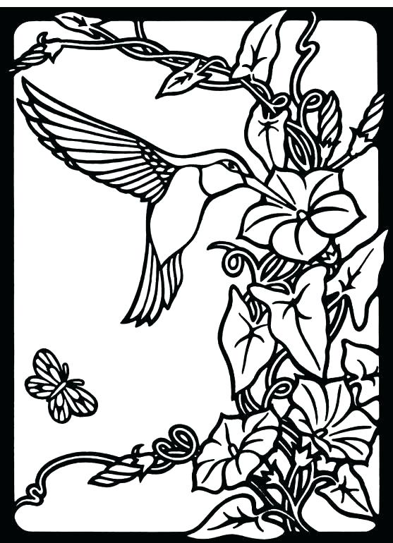 557x770 Hummingbird Coloring Pages Adult Hummingbird Coloring Pages