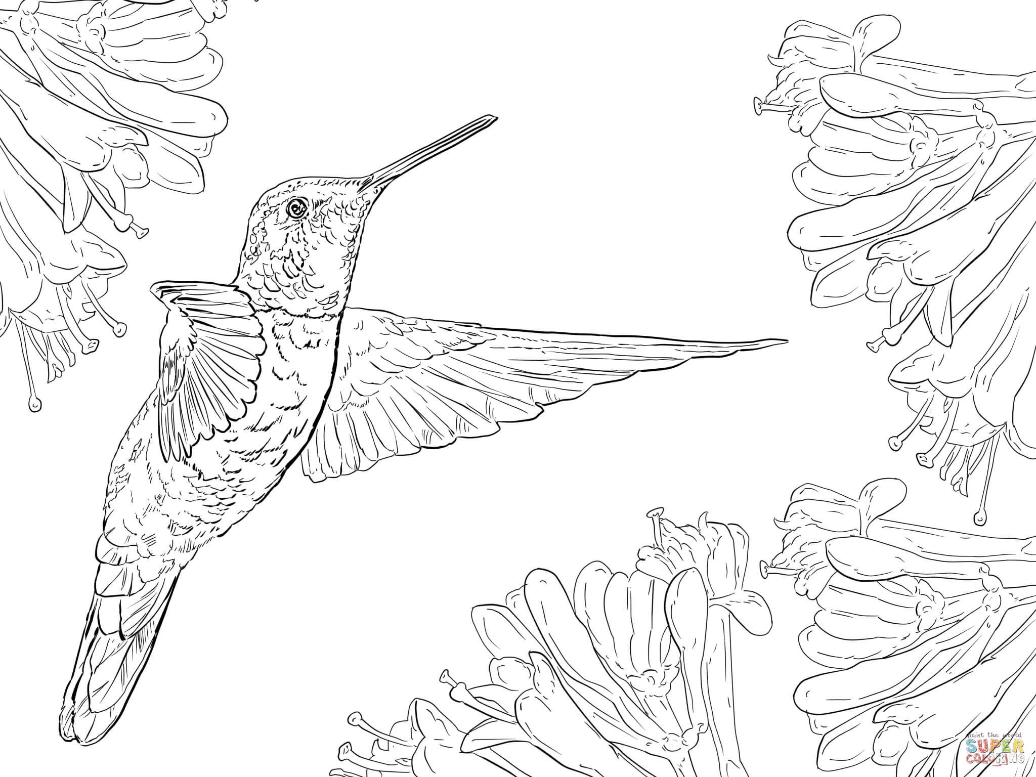 2048x1536 Hummingbird Coloring Pages For Adults Free Dwonloadable Color