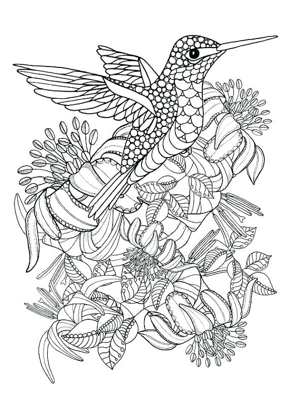 570x807 Hummingbird Coloring Pages Hummingbirds Birds Coloring Pages Cute