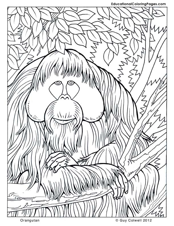 612x792 Hummingbird Coloring Pages Hummingbird Coloring Pages For Adults