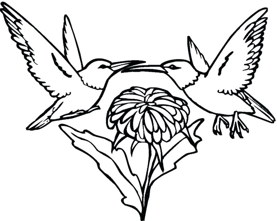945x752 Hummingbird Coloring Pictures Hummingbird Adult Coloring Page