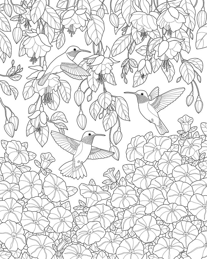 720x900 Hummingbirds And Flowers Coloring Page Painting