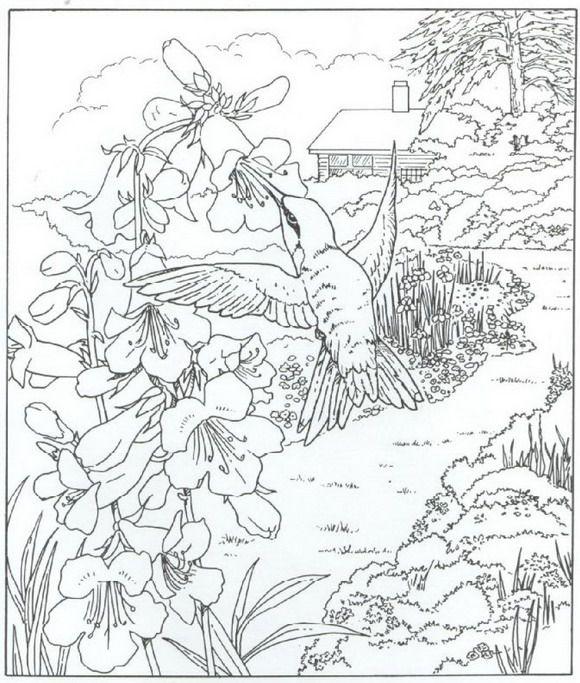 580x683 Best Humming Birds Art Coloring Images