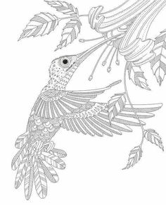 Hummingbird Coloring Pages For Adults at GetDrawings ...