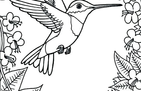 469x304 Hummingbird Coloring Pages